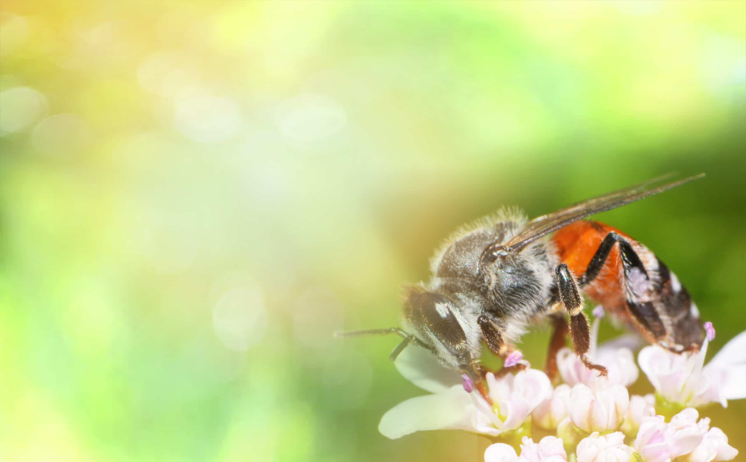 nature-green-yellow-background-abstract-nature-bright-bee-flower-bee-collects-spring-be